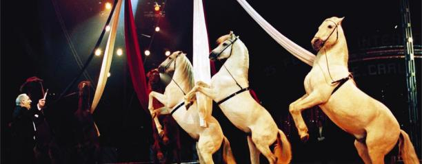 The International Monte-Carlo Circus | Festival - January